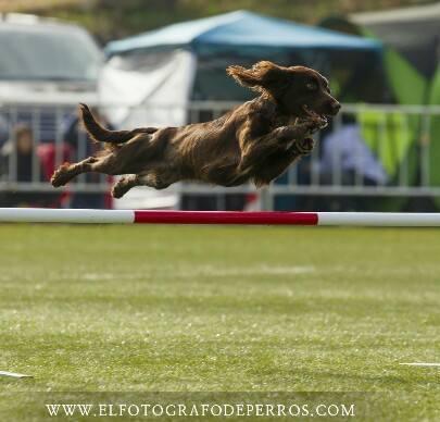 Equipo de competición Mi perro 10