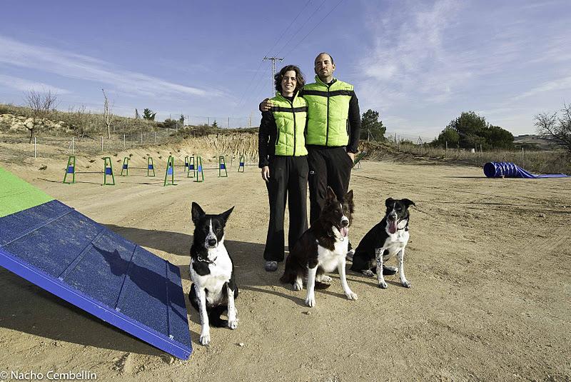 Adiestramiento para perros en Madrid