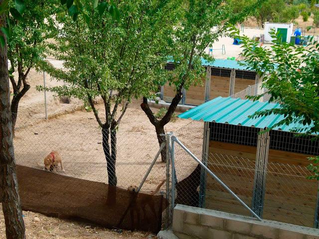 Centro canino en Madrid