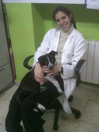 Etología clínica para perros en Madrid
